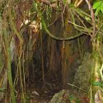 Khao sok Höhle im Dschungel