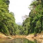 Khao Sok Safari