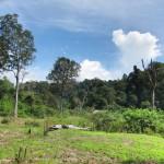 Koh Ra Dschungel