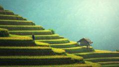 das klima in thailand