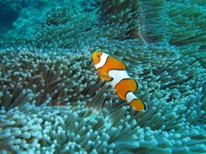 Nemo gibt es immer noch - Garantiert!