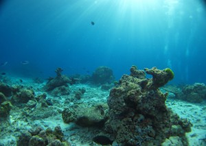 Glasklares Wasser, aber tote Korallen und kaum Fisch